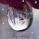 Look up at the Star Christmas card by photofairy
