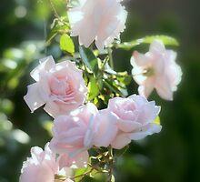 Pink New Dawn Rose by Nugrahini Tj.