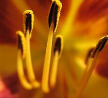 Yellow Flower by GTPNISM0SKYLINE