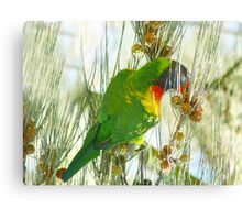 Rainbow Lorikeet Canvas Print