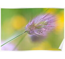 The Lightness of Being - Grasses in the Wind I Poster