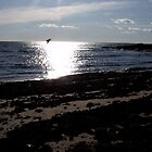 This Was a Fun Shot of the Sun and Sea by CarolLeesArt