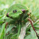 Cicada Portrait by Sherilee Evelyn