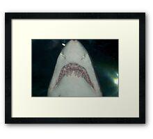 Jaws Jnr. Framed Print