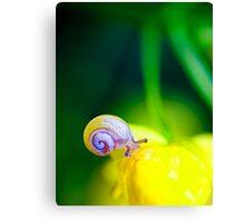the beautiful snail Canvas Print