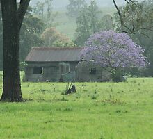 Purple Shack - Northern Rivers NSW by CasPhotography