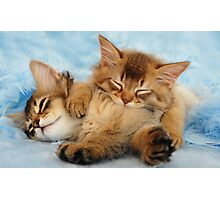 Sleepy kittens Photographic Print