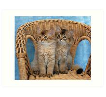 somali kittens on a wicker chair Art Print