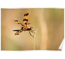 The Golden Winged Dragon Fly Poster