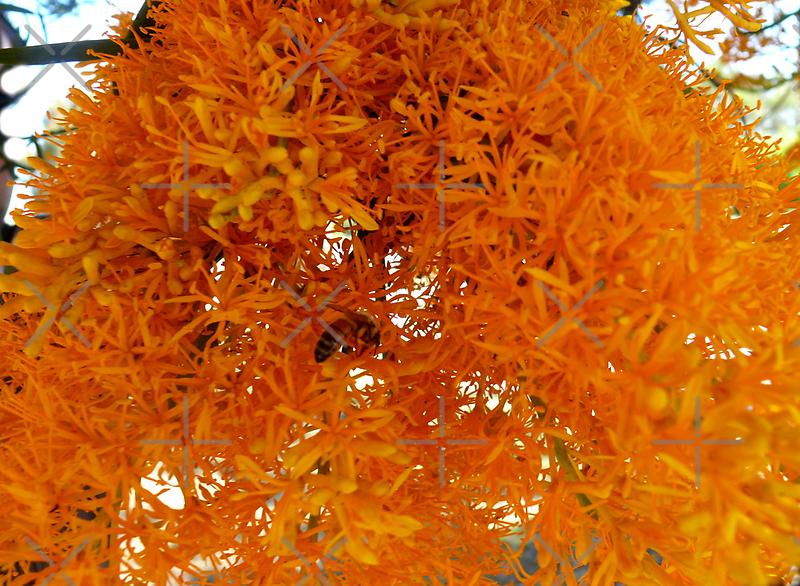 """Christmas Tree"" WA style by Sandra Chung"