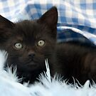 black kitten portrait by sarahnewton