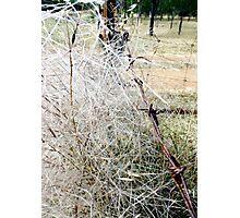 Spear Grass Photographic Print