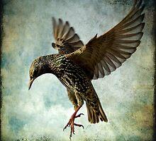 Textured Starling Ballet by igotmeacanon