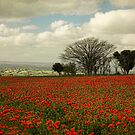 October Poppies by Amanda White