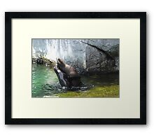 seal wrestling Framed Print