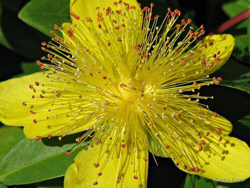 Flower fireworks by Kathy Yates