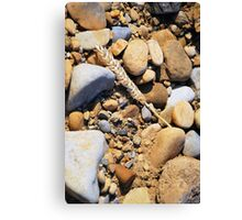 Some Fell on Stoney Ground Canvas Print
