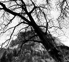 Monastery and tree  by Erdj