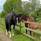 Family of horses by sarahnewton