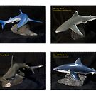 Shark Collection by Shelagh Linton