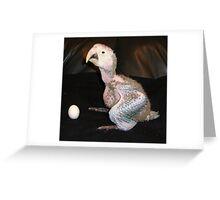 Macaw 5 Weeks Greeting Card