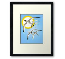 Five Tropic Birds and Sun  Framed Print
