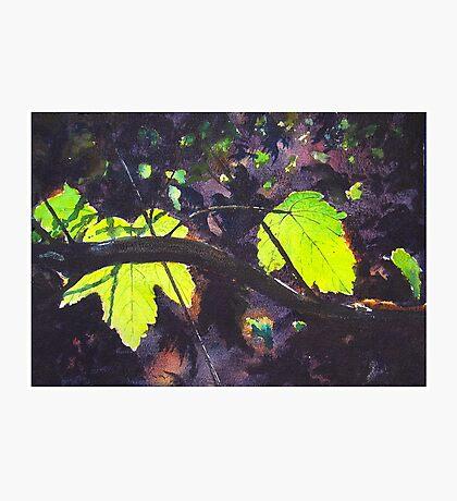 """""""Neon"""" Photographic Print"""