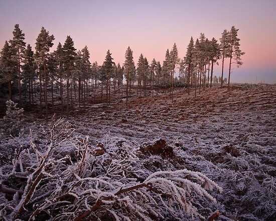 Frosty Clearing at dusk by Christopher Thomson