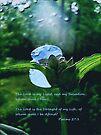 Psalms 27:1 by NatureGreeting Cards ©ccwri