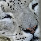Snow Leopard by Al Bourassa