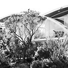 Mid Century Modern Esmond Dorney Hobart Australia by Jane McDougall