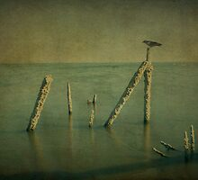 """""""Magnificent Desolation"""" by Steve Silverman"""