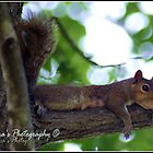 Lazy Squirrel by Phae2584