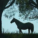 Framed Horse by WTBird