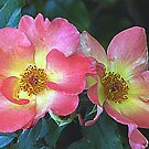 Last of the Knockout Roses 2009 by WTBird
