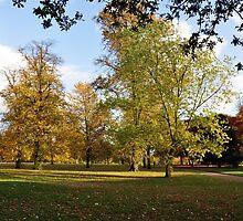 Hyde Park, London by Pat Herlihy
