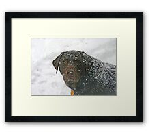 What's a little snow Framed Print