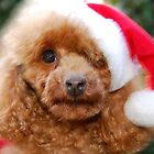 Santa Toffee by triciamary