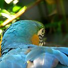 Macaw at Pana'ewa Rainforest Zoo by Ellen Cotton