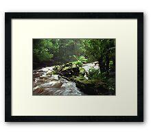 Below Russell Falls - Tasmania Framed Print