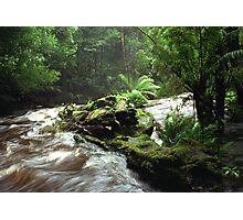 Below Russell Falls - Tasmania Photographic Print