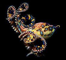 Blue Ringed Octopus by bushpilot