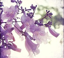 Purple Snow by Serinissima