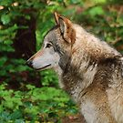Wolf thoughts by Rodney55