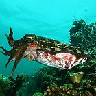 Cuttlefish by Ryan Pedlow