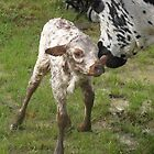 Dottie welcomes baby Carol to our ranch. by emjay4010
