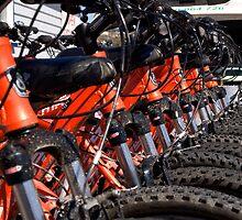 Mountain bikes in row by Paul Gilbert