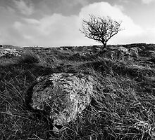 Tree, Malham Moor, Yorkshire Dales by dlsmith