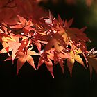 Japanese Maple in Autumn by Nugrahini Tj.