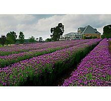 Lavender Farm Daylesford Victoria Photographic Print